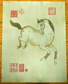 Asian-Style Appaloosa Portrait